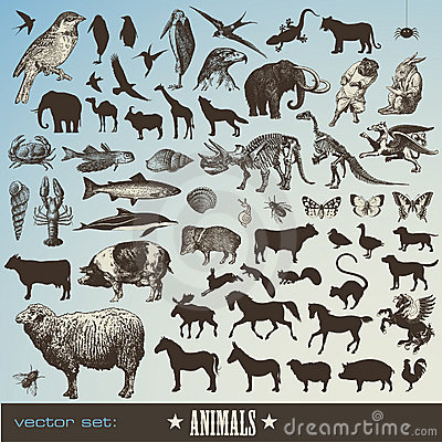 Animais ajustados
