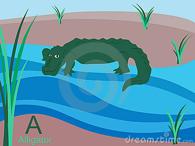 Animal alphabet flash card, A for alligator