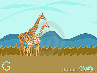 Animal alphabet flash card, G for giraffe