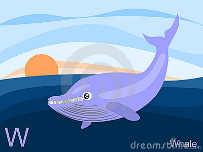 Animal alphabet flash card, W for whale