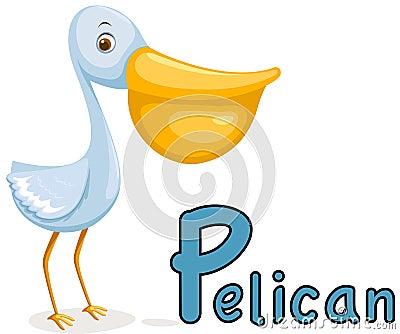 Animal alphabet P for pelican