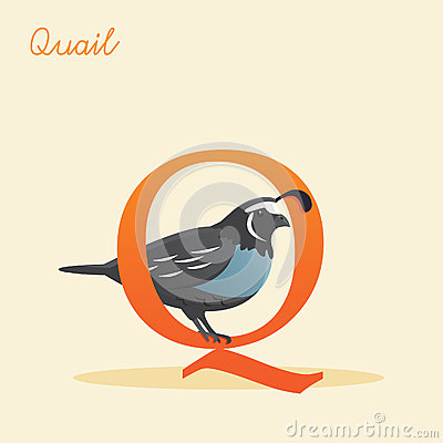 Animal alphabet with quail