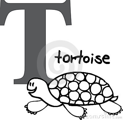 Animal alphabet T (tortoise)