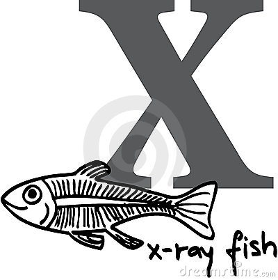 Animal alphabet X (x-ray fish)