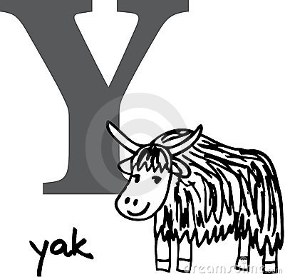 Animal alphabet Y (yak)