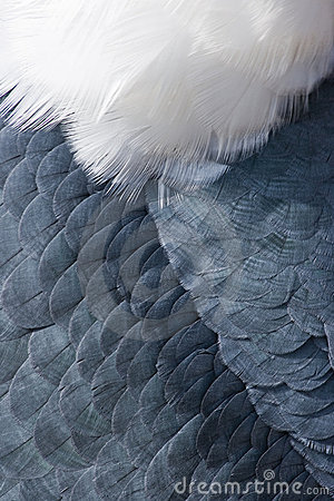 Free Animal Backgrounds - Feathers Stock Photos - 11534293