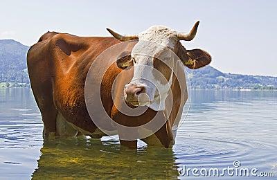 Animal bathing
