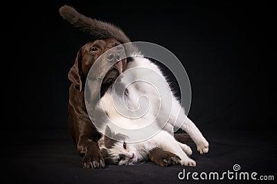 Animal Best Friends