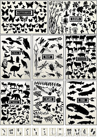 Animal, bird, fish, insect, butterfly and plant