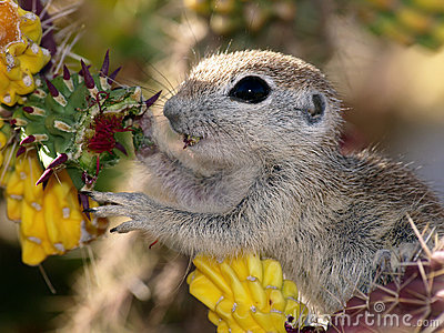Animal Eating From Plant - Horizontal Stock Photos - Image ...