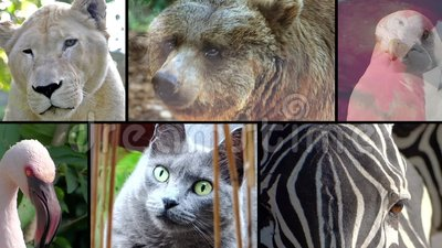 Animal faces, montage. Close-ups of various animal faces stock footage