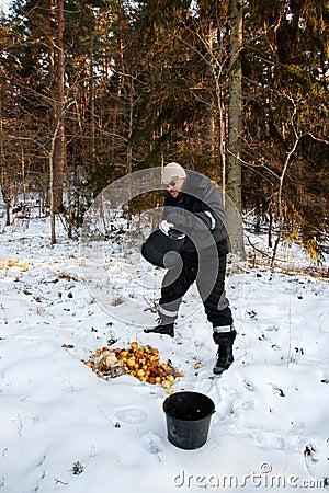 Animal feeding in winter forest