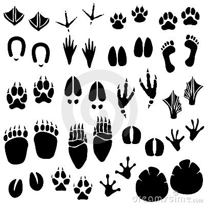 Free Animal Footprint Track Vector Royalty Free Stock Photo - 14539725