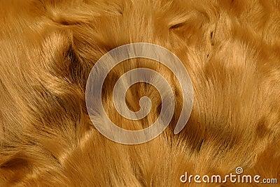 Animal fur  /III