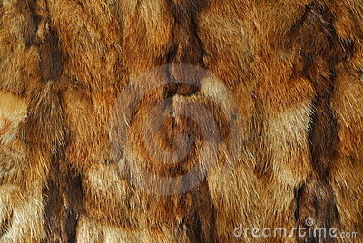 Animal fur pattern