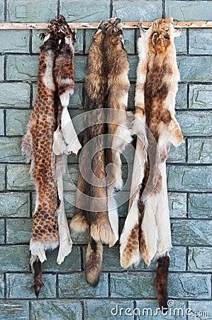 Animal Furs Hanging On A Wall Stock Image Image 19081061