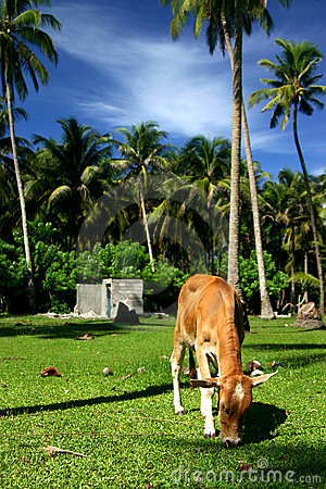 Free Animal Grazing In The Tropics Royalty Free Stock Images - 630449