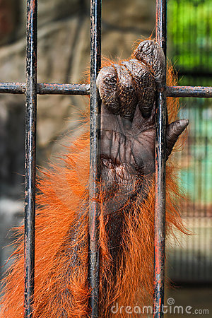 Animal hand