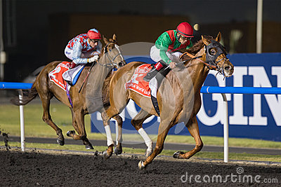 Animal Kingdom wins Dubai World Cup 2013 Editorial Stock Photo