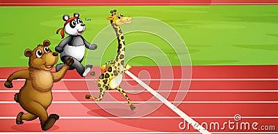 An animal marathon