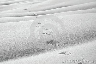 Animal path in snow
