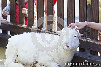 Animal Petting