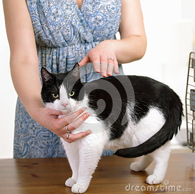 Free Animal Reiki Stock Photos - 24960213