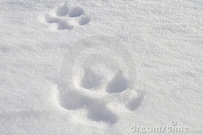 Animal scent in snow