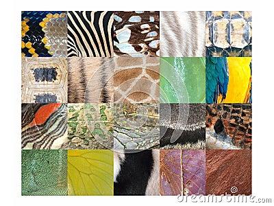 Animal skin fur pattern detail collection