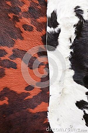 Animal skins color