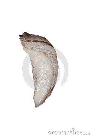 Animal slug