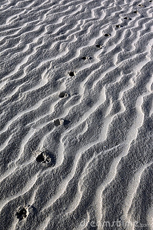 Animal tracks in desert sand - Namibia