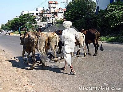 Animal Street
