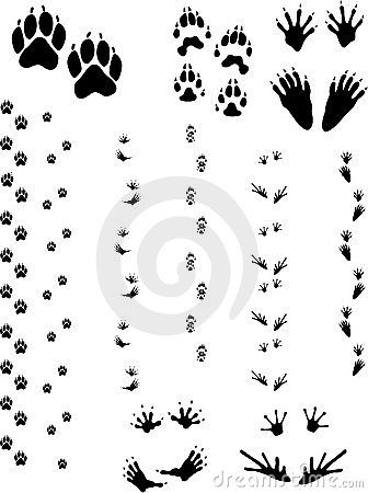 Free Animal Tracks 01 Royalty Free Stock Photos - 6617478