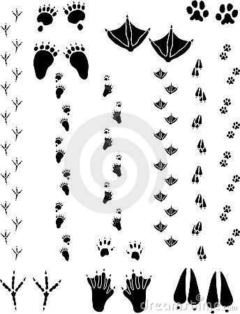Free Animal Tracks 02 Royalty Free Stock Photo - 6617575