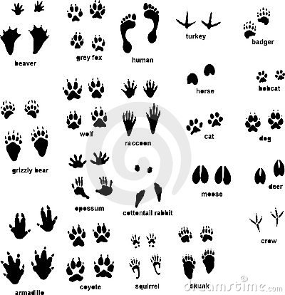 Animal Tracks Royalty Free Stock Images - Image: 11451079