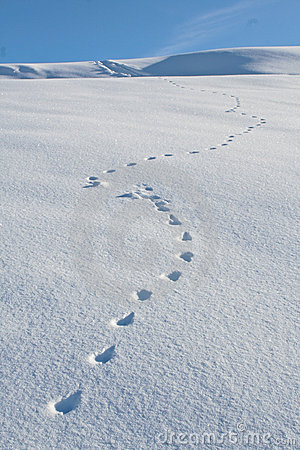 animal-tracks-snow-winter-3974746.jpg
