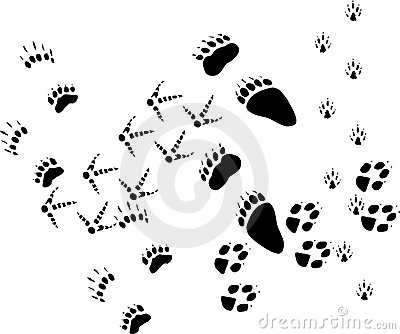 Animal tracks on white