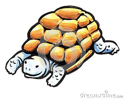 Animale della tartaruga fotografia stock immagine 8896680 - Pagine di colorazione tartaruga ...