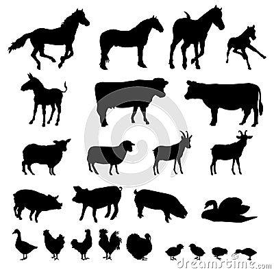 Animales del campo