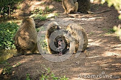 Animals 013 monkey