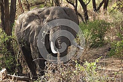 Animals 014 elephant