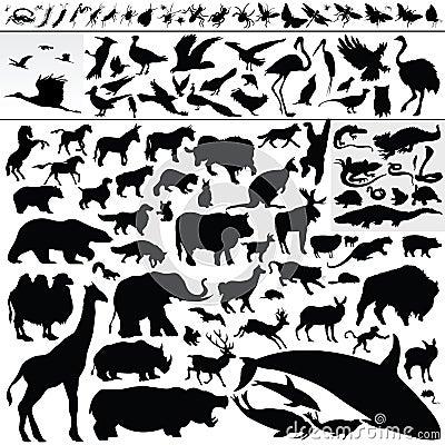 Free Animals Stock Image - 8946271