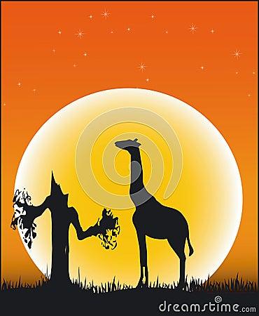 Animals Of Africa