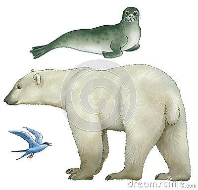 Animals of Arctic