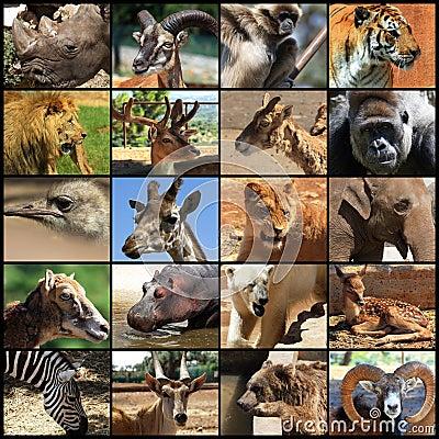 Free Animals Collage Royalty Free Stock Photos - 14477218