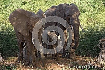 Animals elephant