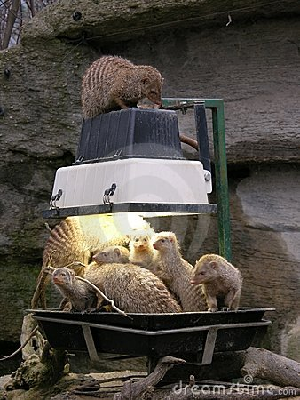 Animals feeding in zoo