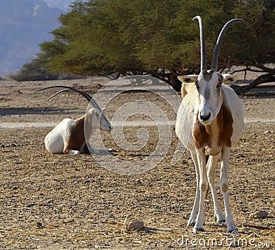 Animals in Hai Bar nature reserve, Israel