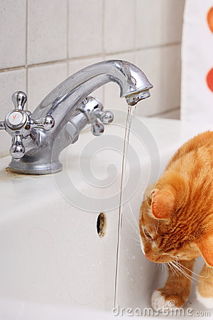 Animals at home red cat pet kitty drinking water in bathroom